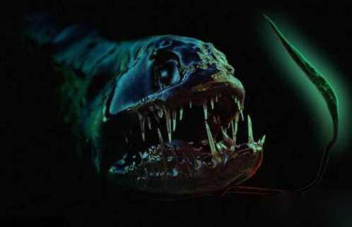 世界上最大的龙鱼 世界上最恐怖的海底生物