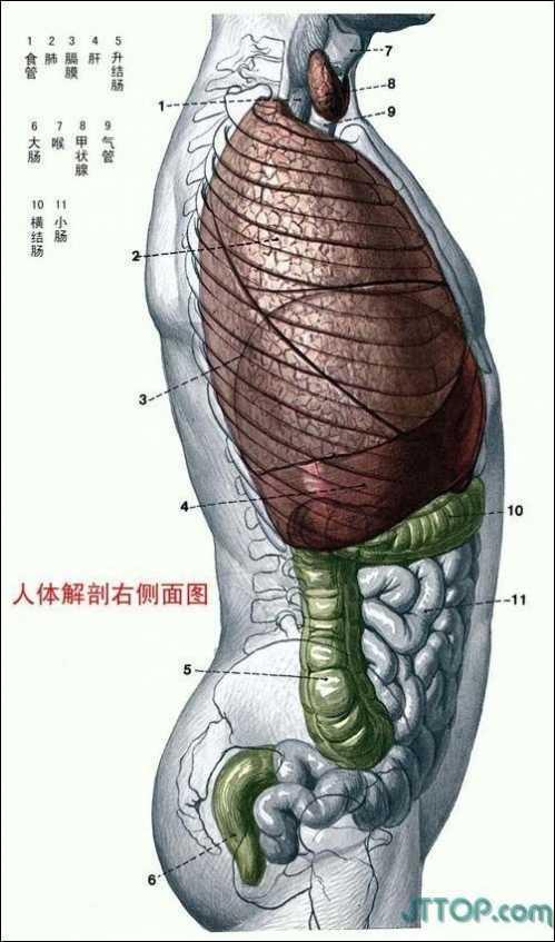 男性人体结构图 人体结构图解