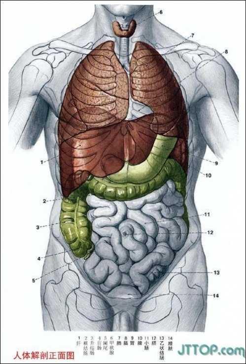 人体结构图解_男性,女性生殖系统(真实图例)★ 女性内生殖系统 卵巢