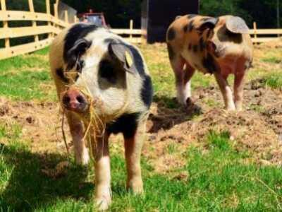 生态养猪 有扶持政策吗